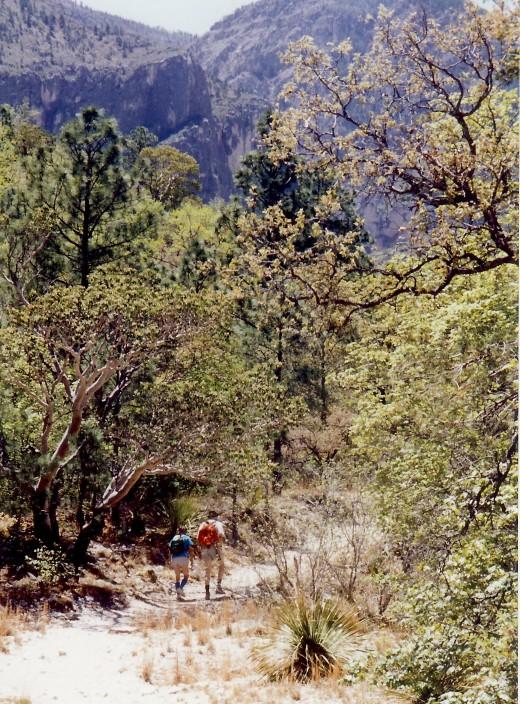 Hiking into McKittrick Canyon