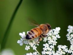 Gardening For The Honey Bees