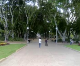 Parks in Sydney are very popular for walking.