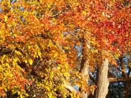 Fall leaf and bark.