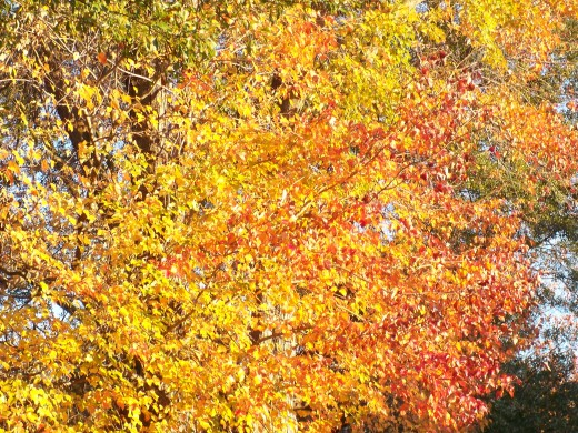 Brilliant yellows and golds mixing their hues.