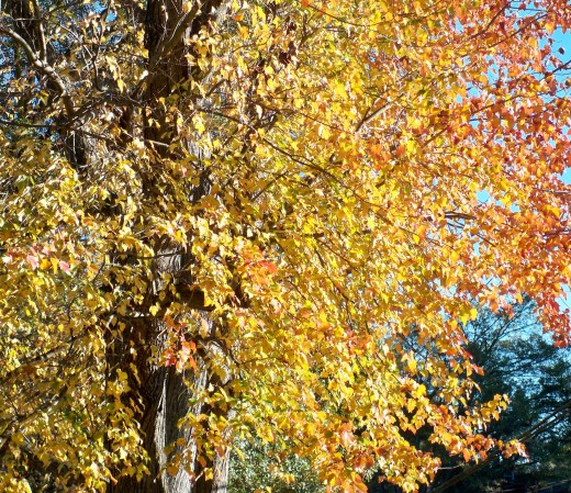 Fall sunlight dancing on sunny colors.