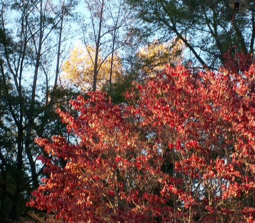 Fall reds coming out.