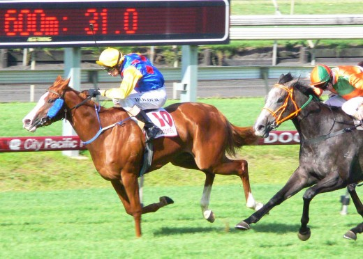 Thoroughbred horse racing at Doomben Race Track near Brisbane