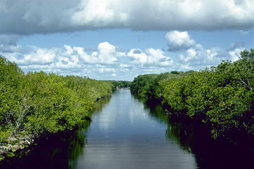 canal through mangroves