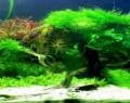 Aquarium Algae Identification And Treatment