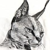 Stragw profile image