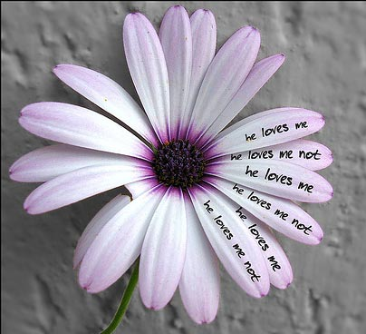 "Flickr Image: northern star- ""he loves me/he loves me not.   """