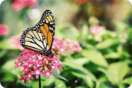 www.sweetcarolinephoto.com