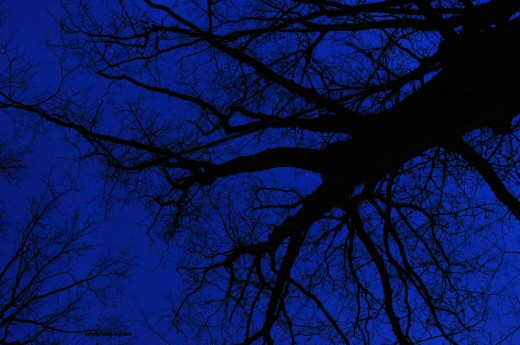 At the point when twilight turns into deep night, there still is a hint of blue light in the sky that a time exposure can record. Such was the case tonight shortly after 6 p.m. The trees, bare of leaves, add mood.