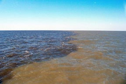 Sediment from the Mississippi River carries fertilizer to the Gulf of Mexico - Courtsey Wikipedia Image : NASA