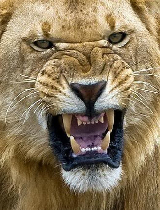 The enemy of our soul prowls around like a hungry lion seeking someone to devour.