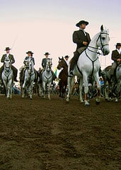 Parade of Lusitanos at the Annual  Golega Horse Fair North of Lisbon