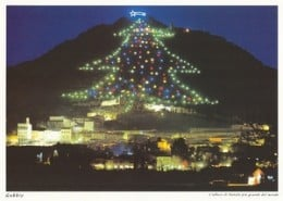 Worlds Tallest Christmas Tree