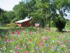 A great looking wildflower garden