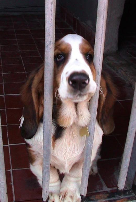 Worried? Dog Kennels don't have to be quite so heartbreaking.