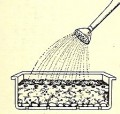 2. Scatter seeds evenly and add a thin layer of potting mixture, no thicker than depth of seed. Water well.