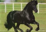The forward free moving Canter.