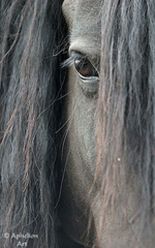 The Forelock and Mane of thick shiny hair.