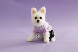 Dog clothing in action