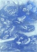 Amphibian Frog Aliens