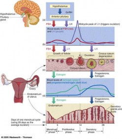 Common Ailments of Reproductive System