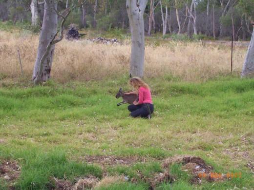 Christmas Greeting to our pet kangaroo