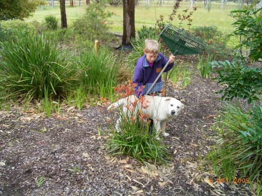 Our Labrador likes the native flora growing in our front garden.