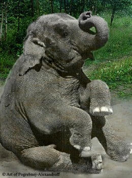 Batyr the Talking Elephant