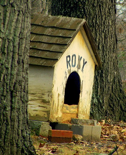 Old Weathered Dog House