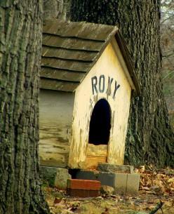 Old Weathered Dog House