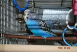 This male is in very good condition for his age, its important to keep the cage clean and provide fresh water every day