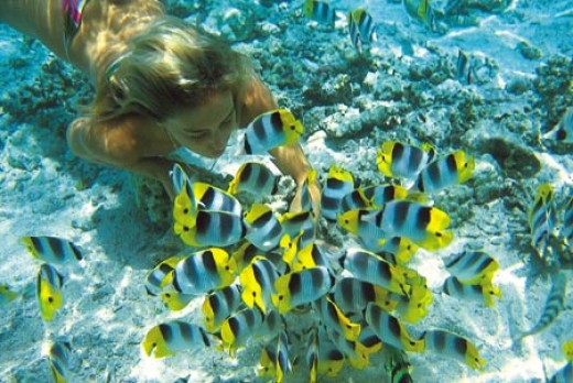 Enjoy snorkeling in crystal clear waters