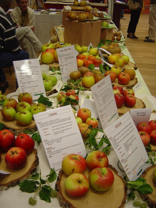 Limousin apples at a show