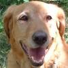 4Paws profile image