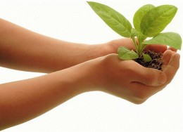 ...everything that has the breath of life in it...I give every green plant for food....And it was so.
