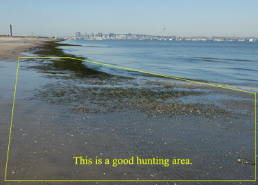 Low tide with exposed mud and eel grass.