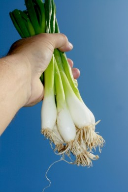 Green onions and tops