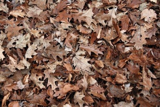 The woods floor is covered with fallen leaves.