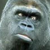 Gorilla Pages profile image