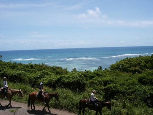 Beautiful horseback tour of Hawaii.