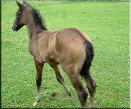 My friend Kathy's new foal