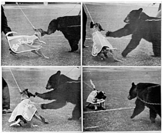 Smokey II vs. Baylor Bear