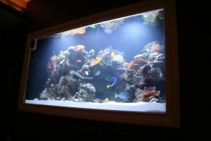 This fish tank is lit with three metal halide aquarium lights.