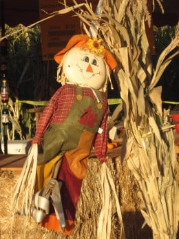 Thanksgiving harvest decoration