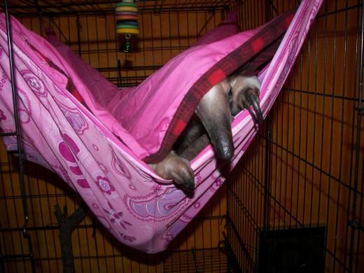 Pua in her newest hammock