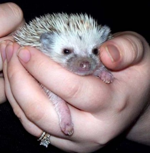 The Hedgehogs... be careful with their quills though especially when they are not in the mood.