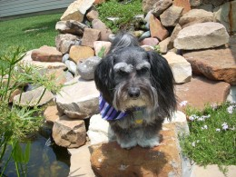 My dog, now at the Rainbow Bridge
