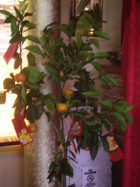 Tree at Restaurant in Flamingo decorated with fruit and Lai See Gifts in traditional Red Envelopes