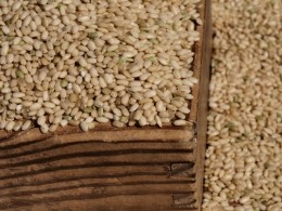 BROWN RICE IS FAR BETTER FOR FIBRE THAN WHITE RICE